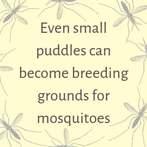Small puddles can breed mosquitoes
